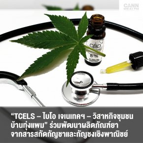 """TCELS – ไบโอ เจเนเทคฯ – วิสาหกิจชุมชนบ้านทุ่งแพม"" ร่วมพัฒนาผลิตภัณฑ์ยาจากสารสกัดกัญชาและกัญชงเชิงพาณิชย์"