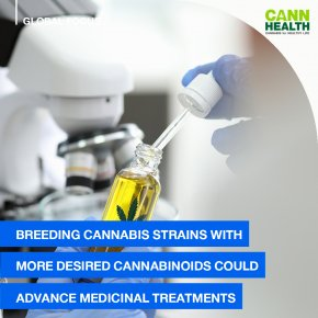 Breeding cannabis strains with more desired cannabinoids could advance medicinal treatments