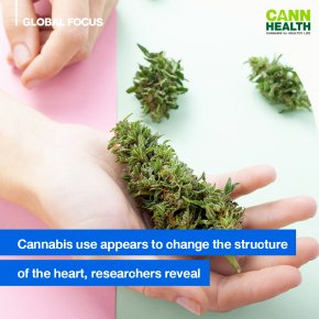 Cannabis use appears to change the structure of the heart, researchers reveal