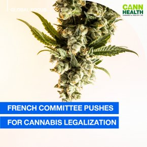 French Committee Pushes for Cannabis Legalization