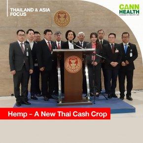 Hemp A New Thai Cash Crop