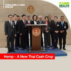 Hemp A New Thai Cash Crop