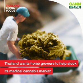 Thailand wants home growers to help stock its medical cannabis market