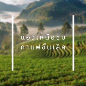 T.O.P. | Thailand Origin Project แค่จิบก็ม่วนใจ๋เหมือนได้ไปแอ่วเหนือ