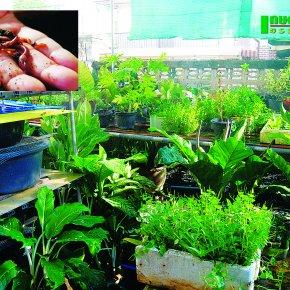 นวัตกรรมเลี้ยงไส้เดือนชั้นล่าง ปลูกผักกระถางชั้นบน