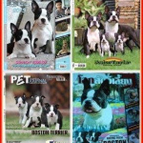 Sairoong Kennel in Magazine