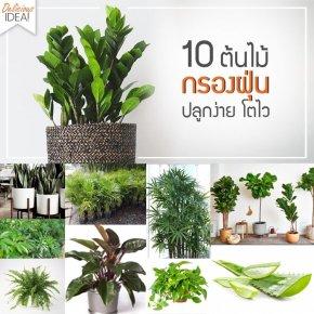 10 ต้นไม้ควรปลูก ช่วยกรองฝุ่น ดูดสารพิษ