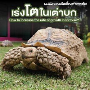เร่งโตในเต่าบก How to increase the rate of growth in tortoise?