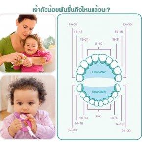 ช่วงเวลาในการขึ้นของฟันเด็กทารก