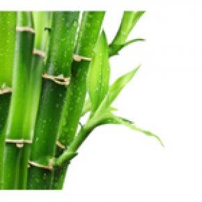Bamboo : มหัศจรรย์จากธรรมชาติ