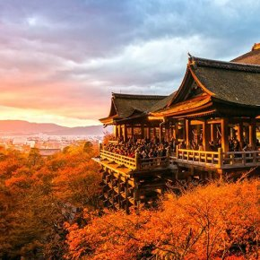 6 steps การไหว้พระที่ศาลเจ้าญี่ปุ่น