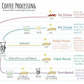 Coffee Processing กระบวนการแปรรูป