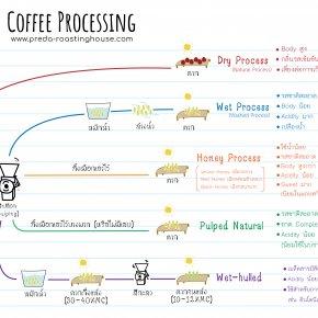 Coffee Processing กระบวนการแปรรูปกาแฟ