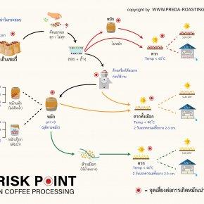 จุดเสี่ยงในกระบวนการแปรรูปกาแฟ Risk Point in Coffee Processing