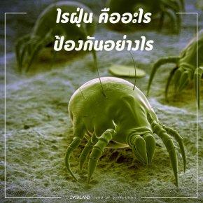 ไรฝุ่น (house dust mite)  คืออะไร และสามารถป้องกันได้เช่นไร