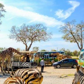 ตื่นตาตื่นใจ ใกล้ชิด ยีราฟ เสือ สิงโต แบบประชิดตัว ที่ สวนสัตว์เปิดซาฟารีปาร์ค กาญจนบุรี