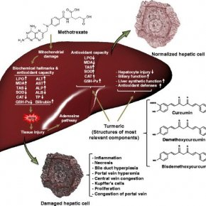 How to maintain and protect the liver from toxins, drugs, chemicals and harmful residues in food.