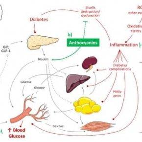 5 เหตุผลที่สารแอนโทไซยานินจากผลไม้ตระกูลเบอรรี่ลดระดับน้ำตาลในเลือดหลังอาหารได้
