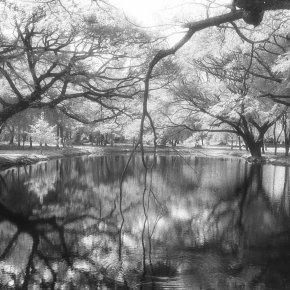 เย็นกาย เย็นใจ สุขสันต์วันสงกรานต์  ๑๓ เมษายน ๒๕๖๒  #สุโขทัย #infrared #film