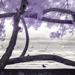 ณ หาดนพรัตน์ธารา เดินๆ บังเอิญเหลือบไปเห็นต้นไม้ ที่ชวนนึกถึงเรือใบ