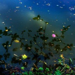 ดอกไม้และใบไม้ที่ร่วงหล่นอาจดูเศร้า แต่เคล้าด้วยความงดงามเสมอ เมื่อใจเราเปิดกว้างพอ