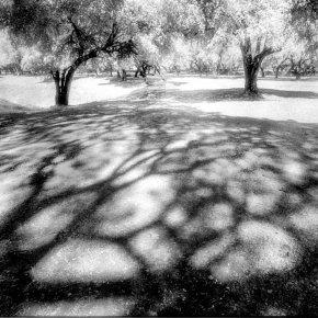 เงาอดีต..ณ อโยธยา..  #infrared #film #KODAK #HIE