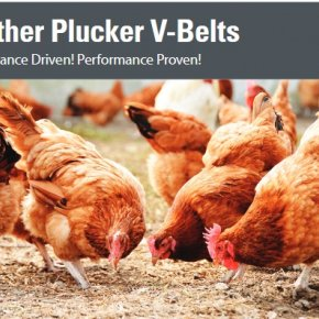 New Product: Feather Plucker V-Belts