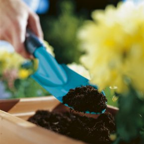 Don't have green fingers? How to keep your garden alive