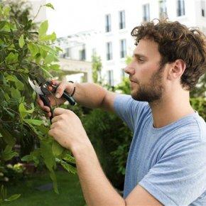 การตัดแต่งกิ่งต้นไม้: สิ่งที่คุณควรจำ