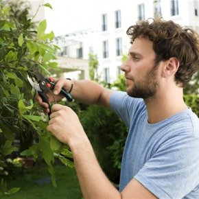 Tree pruning: some things you should keep in mind