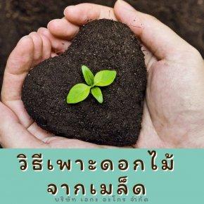 วิธีการปลูกดอกไม้ จากเมล็ดพันธุ์ดอกไม้