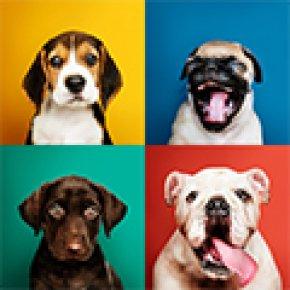 DOG Insurance - ประกันภัยสุนัข