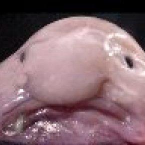 ปลาหน้าตาประหลาด มีครีบคล้ายมือและเท้า หน้าตาคล้ายจะบอกข่าวร้ายอยู่ตลอดเวลา