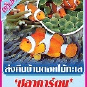'ปลาการ์ตูน' 'นีโม่ไทย' ยังต้องเพิ่ม