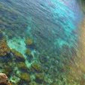 คุณภาพน้ำและมาตรวัดต่างๆ ในระบบตู้ทะเล Reef Aquarium Water Parameters