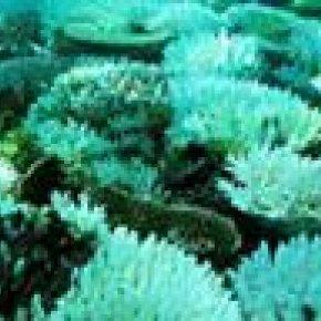 ปะการังฟอกขาว 90%ในแหล่งท่องเที่ยว