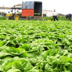 การเตรียมแปลง วิธีการปลูกและวิธีการดูแลรักษาปลูกพืชผักสวนครัว