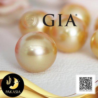 ไข่มุก South Sea เม็ดเดี่ยว ได้รับการ Certified โดยสถาบัน GIA (Gemological Institute of America) GIA Report No. 7383126689   มุก South Sea น้ำเค็มคัดเกรด  Undrilled Pearl สีทอง ทรงเกือบกลม-ซาลาเปา ขนาด 12.12 x11.78 - 14.98 x 14.35 mm เกรด AA+   Code No. 1