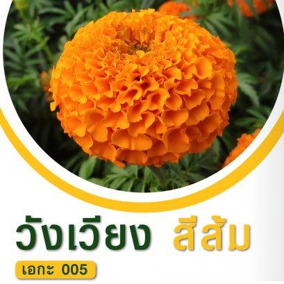 ดาวเรือง วังเวียง ส้ม 100 เมล็ด