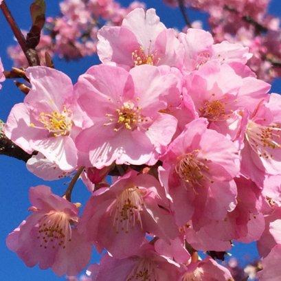 (หยุดมาฆบูชา) ทัวร์เอเชีย ญี่ปุ่น โตเกียว ฟูจิ ชิซูโอกะ 6 วัน 3 คืน บินตรงการบินไทย TG