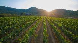 """""""หัวหินฮิลส์"""" รีแบรนด์""""มอนซูน แวลลีย์"""" ตอกย้ำความสำเร็จของไวน์ไทยระดับโลก"""