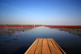 Roter Lotus See, Udonthani