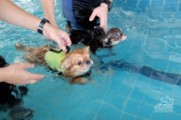 Pet swimming pool
