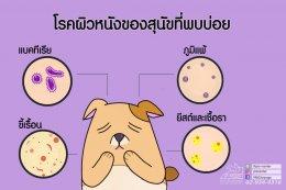 โรคผิวหนังที่พบบ่อยในสัตว์เลี้ยง