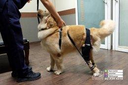 orthopedic device