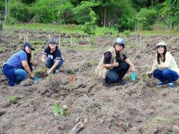 สโมสรไลออนส์ฯ จับมือ The Cube Condo ร่วมปลูกป่าเพิ่มต้นไม้ให้แผ่นดิน