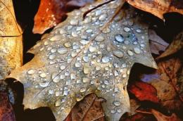ช่วงฤดูฝนจะมีโรคพืชประจำฤดูฝนคือโรคเชื้อรา