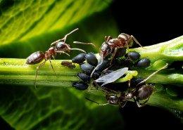 """โรคพืชและแมลง ประจำตระกูล """"มะนาว"""""""