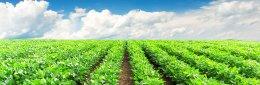 คำนิยามเกษตรอินทรีย์