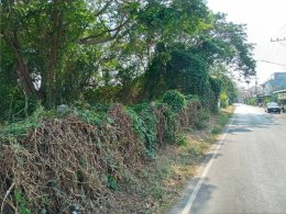 EHL - 212936 ขายที่ดิน 390 ตร.ว พื้นที่สวยเขตอำเภอเมืองพิษณุโลก